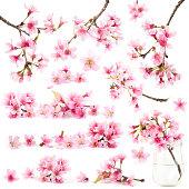 Cherry blossom sakura flower isolated sets