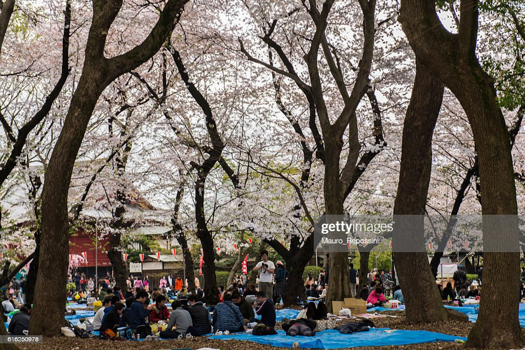 Cherry Blossom season at Ueno Park, Tokyo, Japan : Foto de stock
