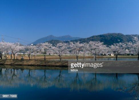 Cherry Blossoms and Mount Tsukuba, Tsukuba, Ibaraki, Japan
