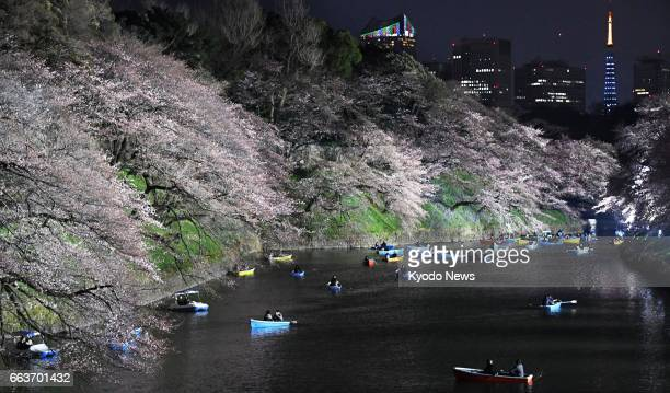 Cherry blossoms are lit up over Chidorigafuchi a moat in central Tokyo on April 2 2017 Tokyo Tower can be seen on the right in the distance ==Kyodo