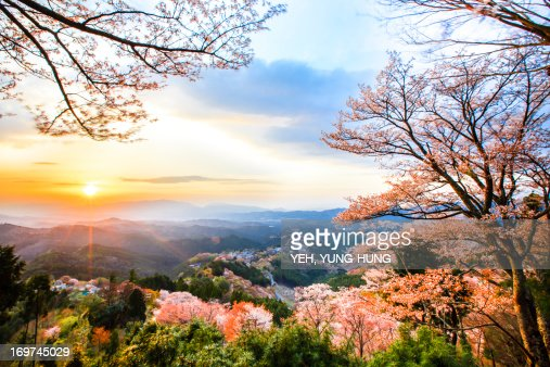 Cherry blossoms at Mount Yoshino