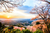 Cherry blossoms at Mount Yoshino
