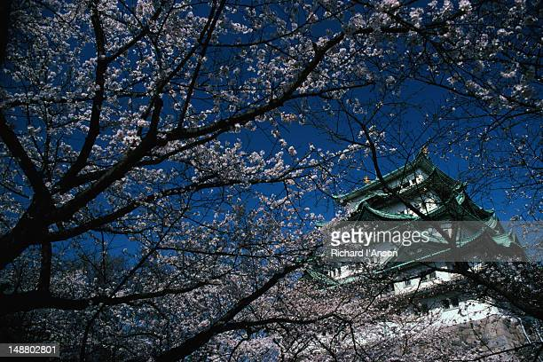 Cherry blossoms at Nagoya Castle.