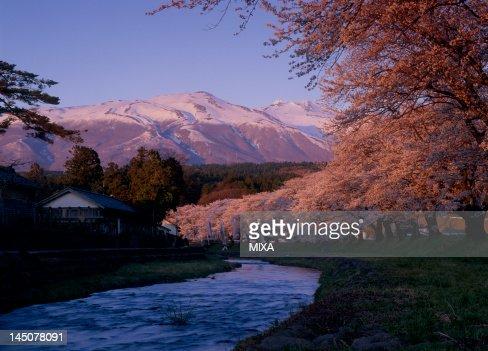 Cherry Blossoms at Nakayama-tsutsumi, Yuza, Akumi, Yamagata, Japan