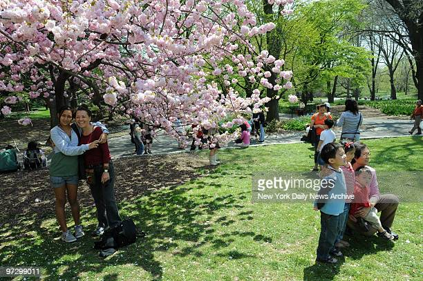 Cherry Blossoms at the Brooklyn Botanic Garden Nikki Goldman and her mom Vikki have their picture taken under a tree in the Cherry walk Other...