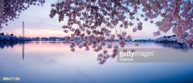 Cherry blossoms frame the Washington Monument and Jefferson Memorial -XXXL