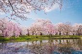 Aomori, Japan - April 28, 2014: