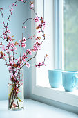 Lovely pink ornamental cherry blossoms in glass vase by window is a sign of Spring