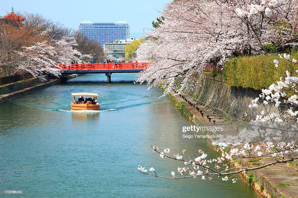 Cherry blossoms over canal, Kyoto