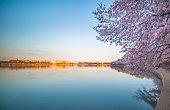 Washington DC, Jefferson Memorial, Tidal Basin, USA, Cherry Blossom