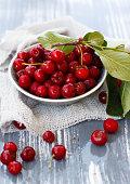 Cherry from my gaden
