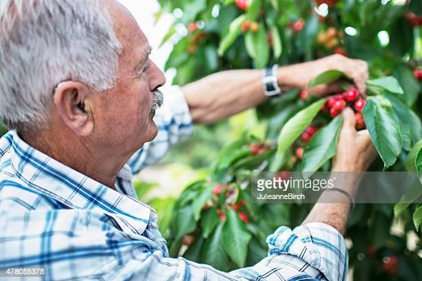 Cherry de retiro
