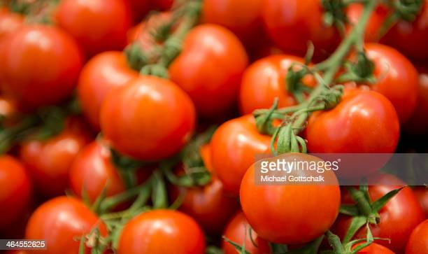 Cherry Tomatoes on a branch on Gruene Woche fair on January 17 2014 in Berlin Germany