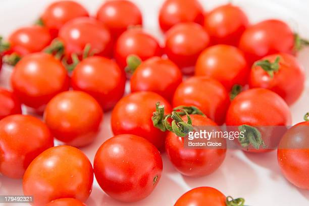 Cherry tomatoes wait to be judged during the 29th Annual Massachusetts Tomato Contest held at Boston's City Hall Plaza