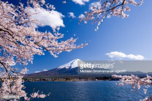 Cherry tree branches and Mt. Fuji, Yamanashi Prefecture, Japan