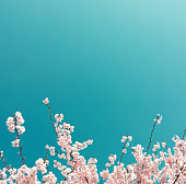 Pastel colored spring background with a lot of copy space.