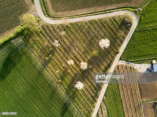 Arbre de la cerise sur les terres cultivées par le haut au lever du soleil