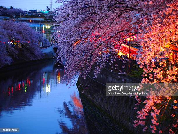 Cherry Tree Over Canal