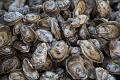 A tableful of farmed Chesapeake Bay oysters freshly harvested from Tangier Sound in Virginia.