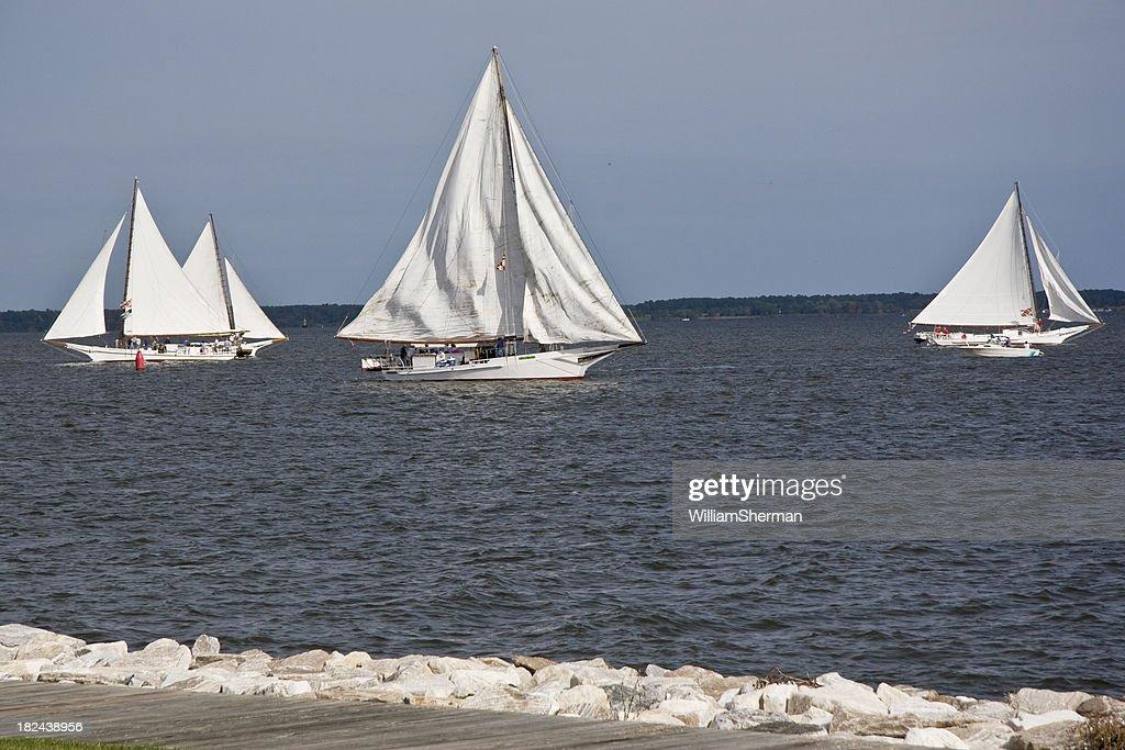 Chesapeake Bay Skipjack Race