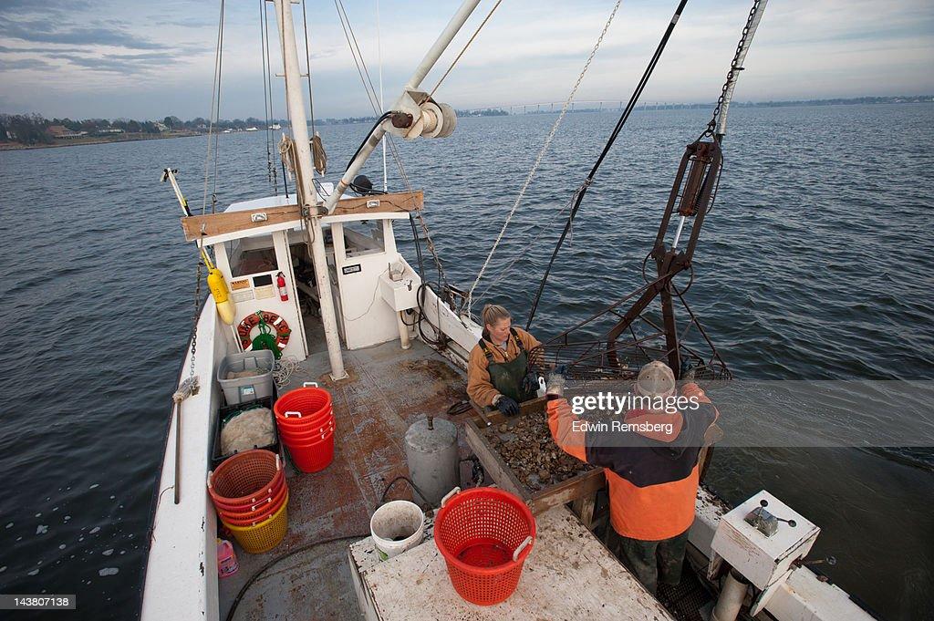 Chesapeake Bay watermen at work.
