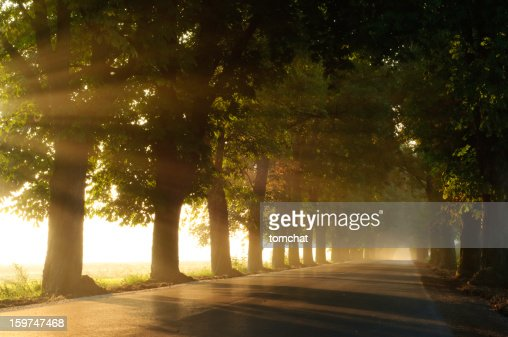 Chestnut avenue in the foggy morning