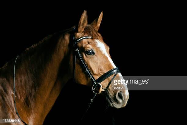 Chestnut Portrait de cheval