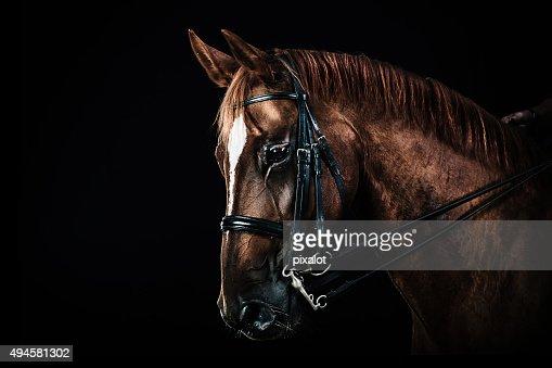 チェスナッツの馬のポートレート