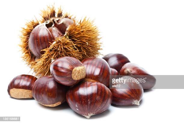 Chestnut sur blanc