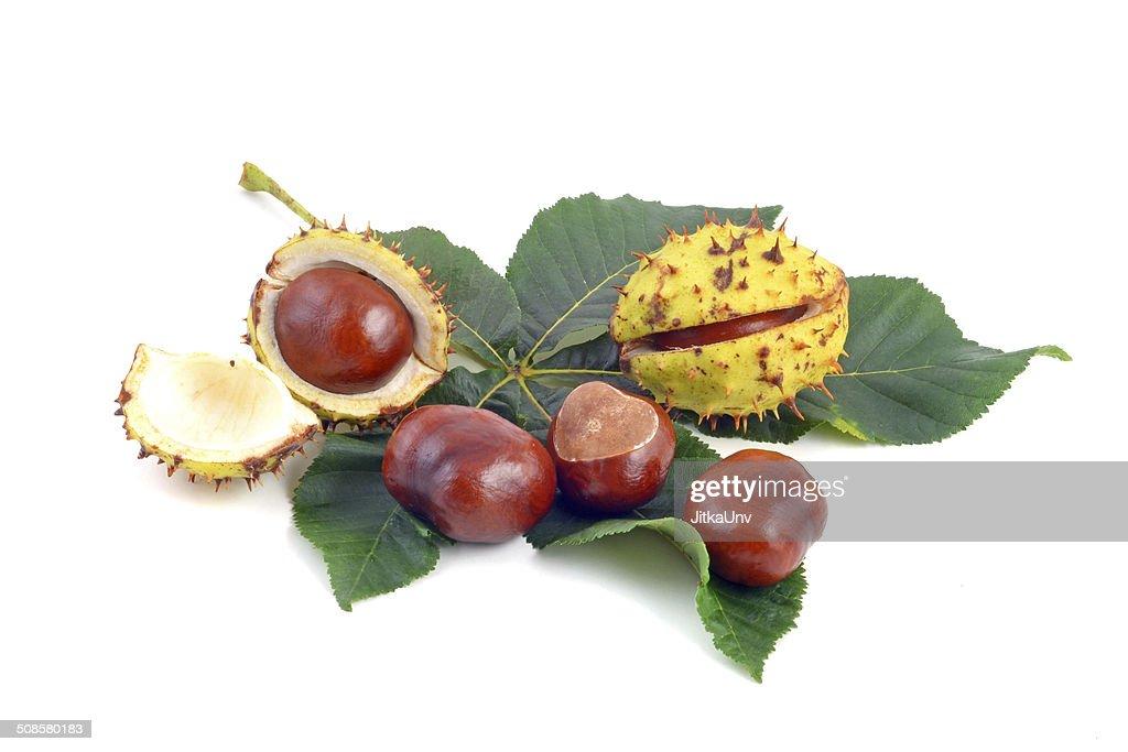 Chestnut : Stock-Foto