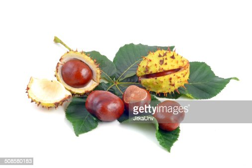 Chestnut : Stock-Foto