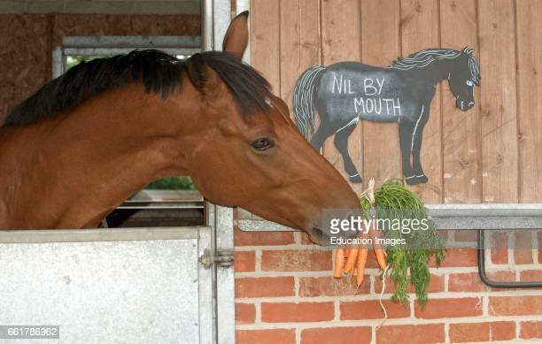 A Chestnut pony eating a bunch of carrots and a chalk board notice stating Nil by Mouth