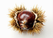Chestnut with spiked shell on white background, close-up