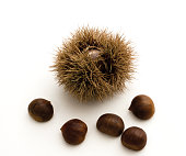 Chestnuts and spiky cupule on white background