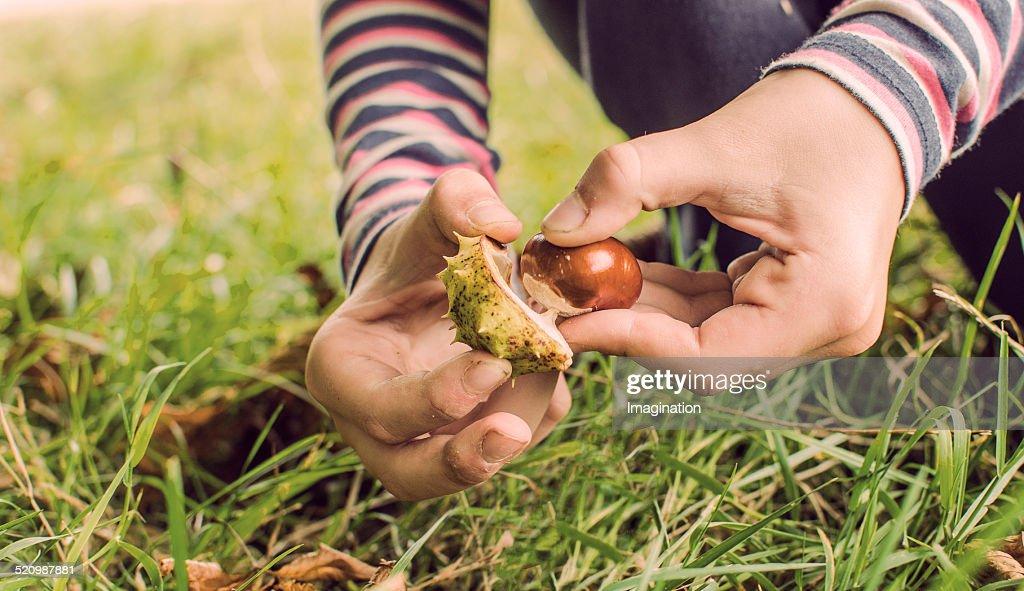 Chestnuts season