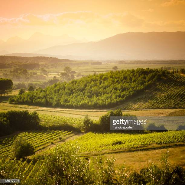 Chianti Region hills with vineyard at sunset in Tuscany