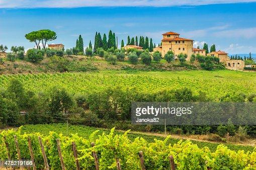 Chianti vineyard landscape with stone house,Tuscany,Italy,Europe : Stock Photo