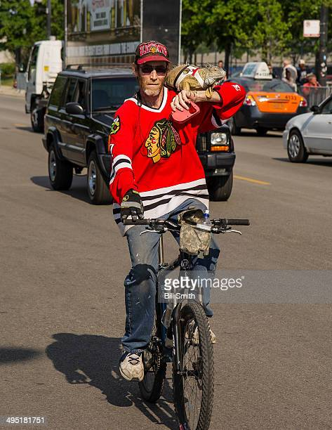 Chicago Blackhawks fan rides to the United Center with his pet iguana prior to Game Seven of the Western Conference Final against the Los Angeles...
