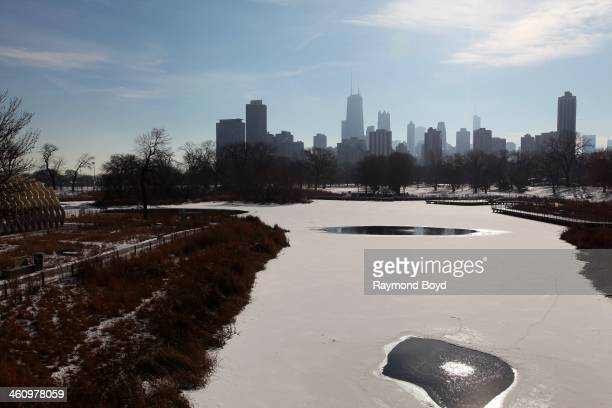 Chicago skyline as photographed from the Nature Boardwalk at Lincoln Park Zoo in Chicago Illinois on DECEMBER 27 2013