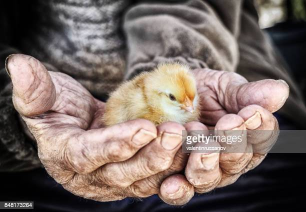 Chick in the hand