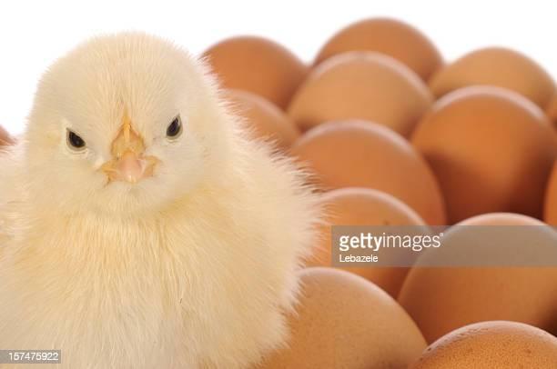 Chick auf Ei