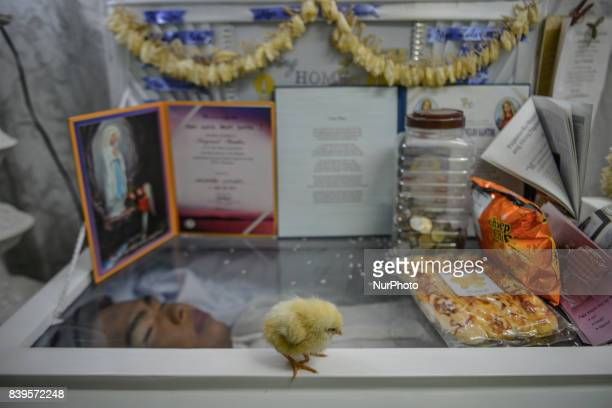 A chick rests on top of the coffin of Kian Loyd Delos Santos at his funeral wake in Caloocan Metro Manila Philippines August 21 2017 Amidst the drug...