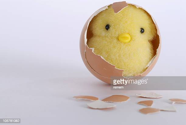 chick slips out of the egg 6