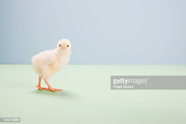 Chick standing with in studio