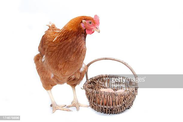 Chicken and eggs in a basket isolated on white