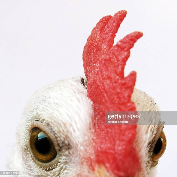 Chicken comb and eyes