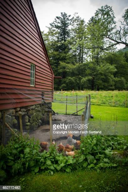 Chicken coop beside barn