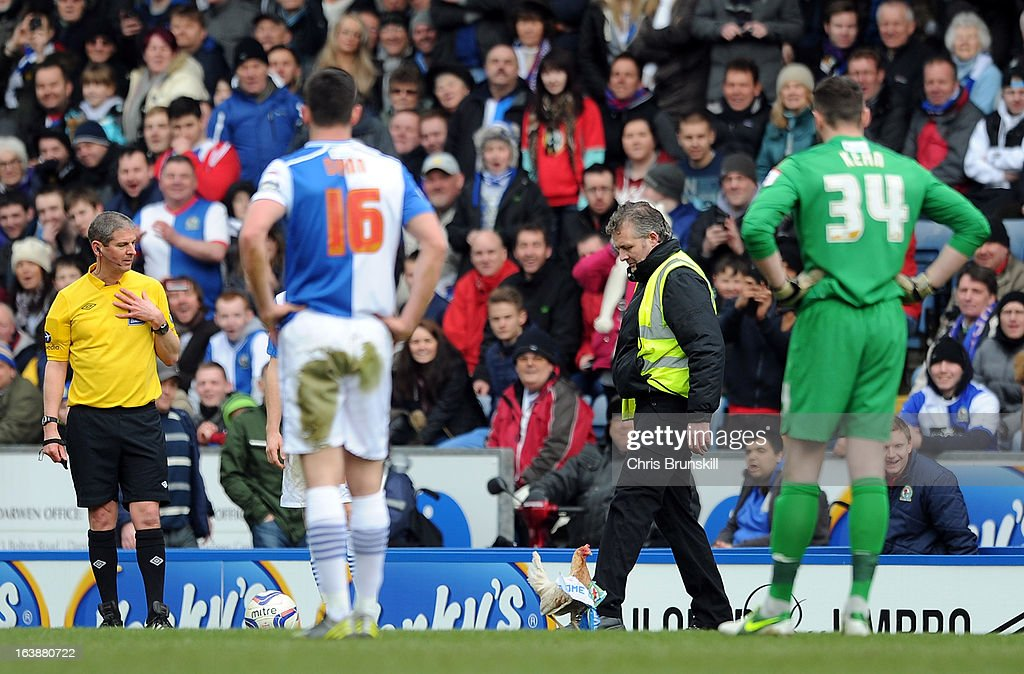 A chicken is released on the pitch during the npower Championship match between Blackburn Rovers and Burnley at Ewood park on March 17, 2013 in Blackburn, England.