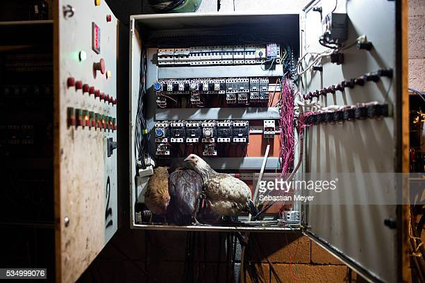 Chickens roost inside a fuse box at an oil refinery A family of displaced Yezidis lives next to an oil refinery in the Kurdish Region of Iraq The men...