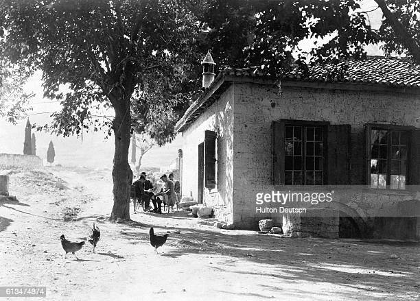 Chickens search for grain in the dappled shade of a house yard